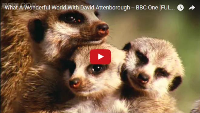 Ez a 2 perces videó megmutatja, milyen csodálatos világban élünk!
