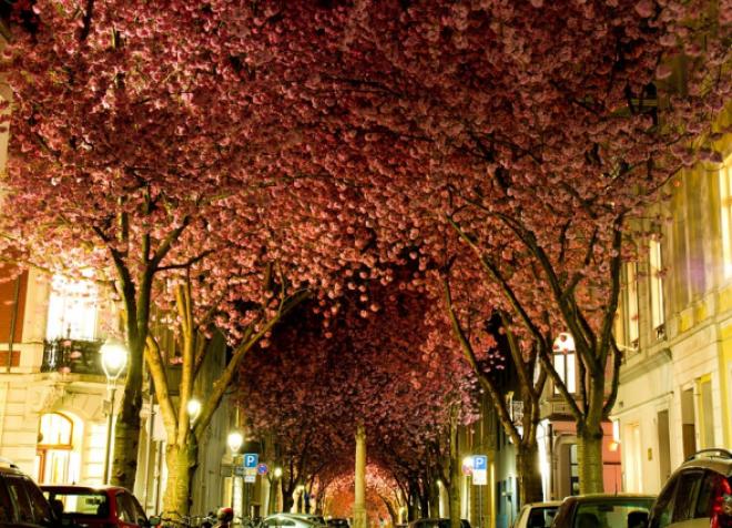 A világ legszebb fái! Nézd meg te is!