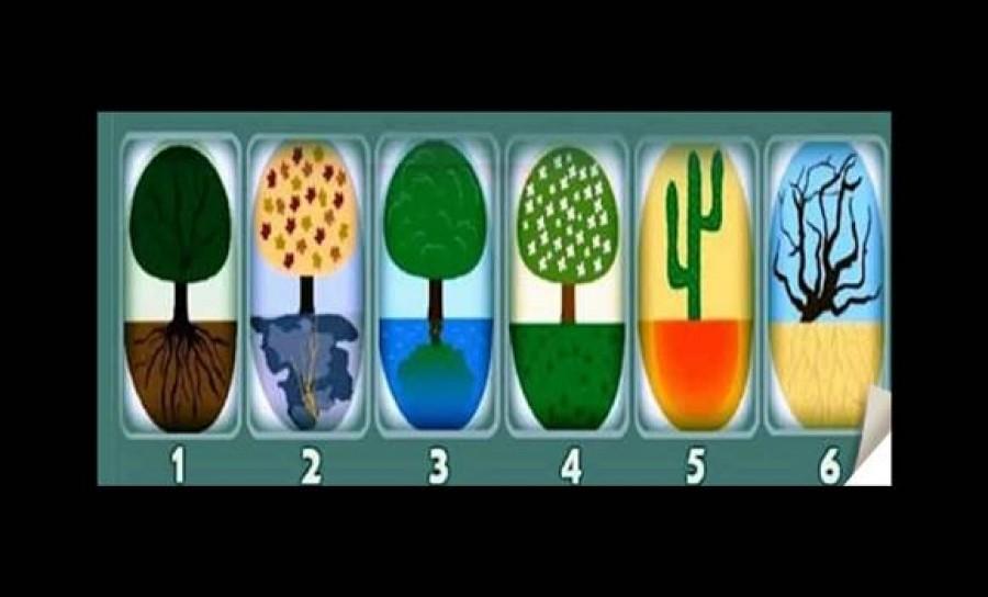 Válassz egy fát -meglepődsz, mennyit elárul rólad!