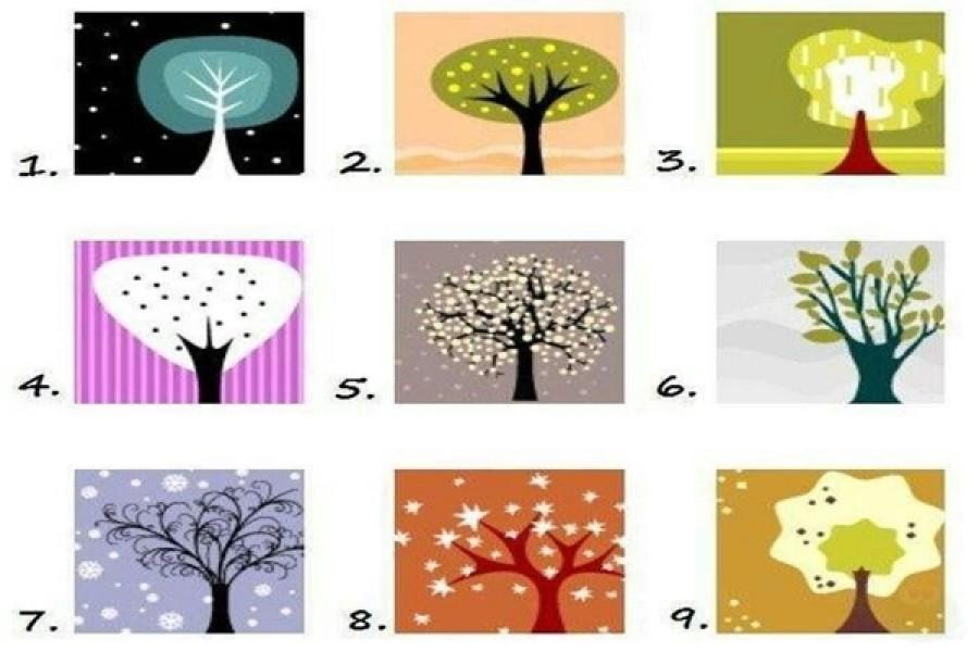 Melyik fa a legszimpatikusabb? Sok mindent megtudhatsz abból, hogy melyiket választod!