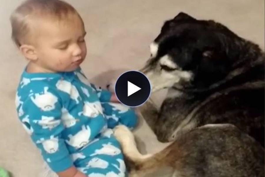 A kisfiú majdnem elalszik -a kutya reakciója nagyon édes!