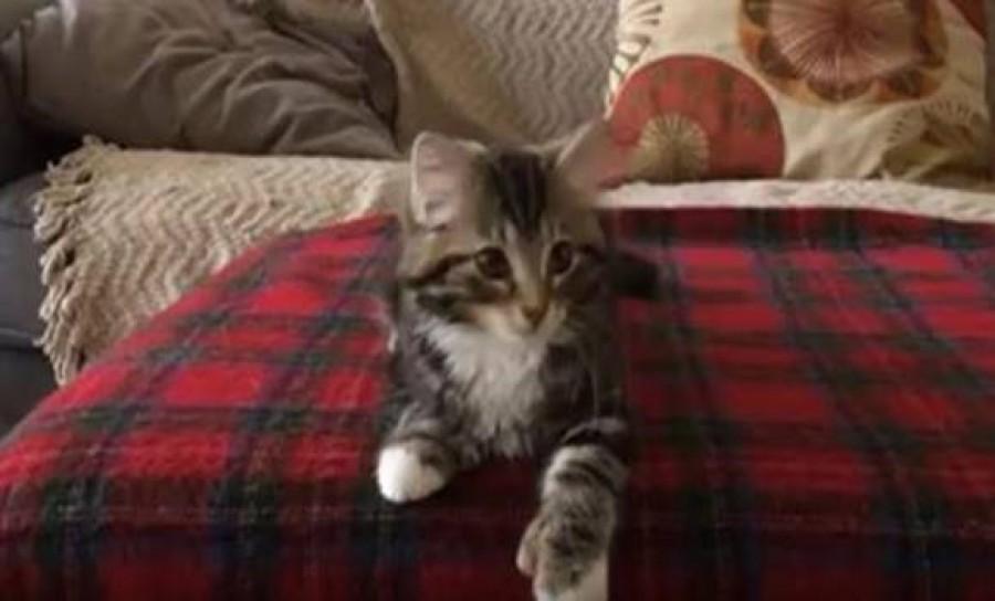 A táncoló cica a mai nap legcukibbja!