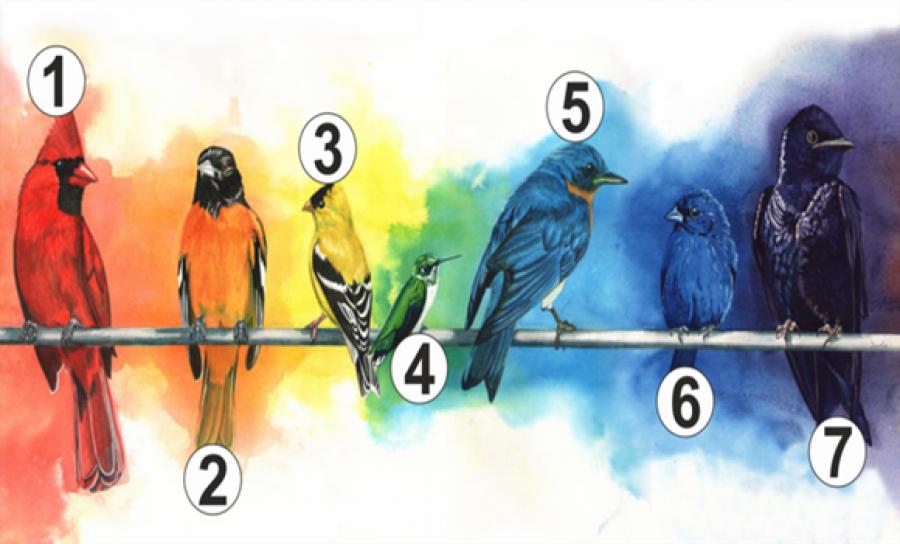 Válassz egy madarat, és kiderül, hogy mi hiányzik legjobban az életedből!