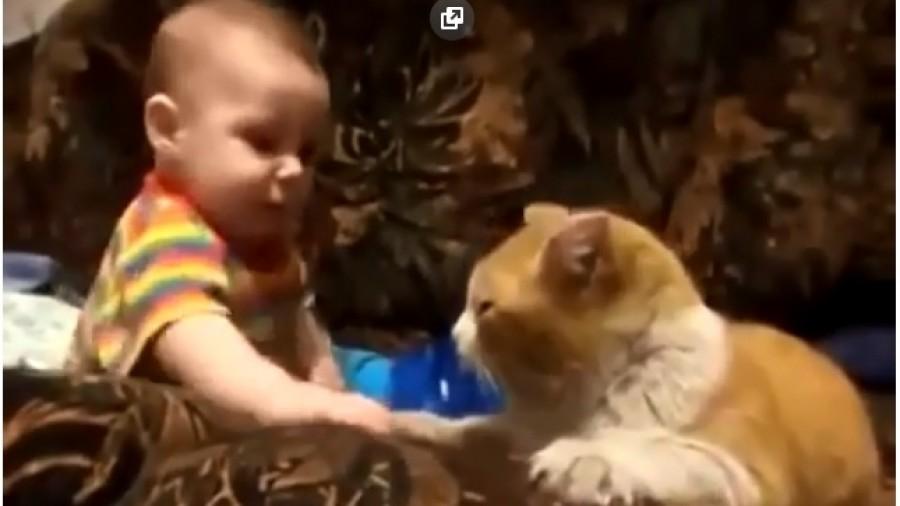 A kisgyerek még nem akart aludni -ekkor jött a macska, aki ráparancsolt!