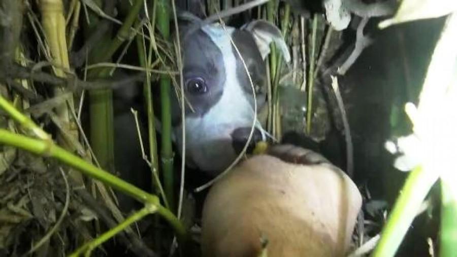 Meg akarta menteni a kóbor kutyát -amikor közelebb ment hozzá, teljesen megdöbbent!