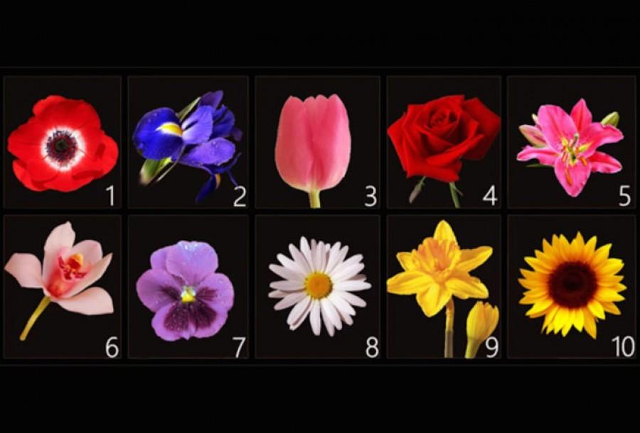 Válassz egy virágot -rengeteget árul el rólad a döntésed!