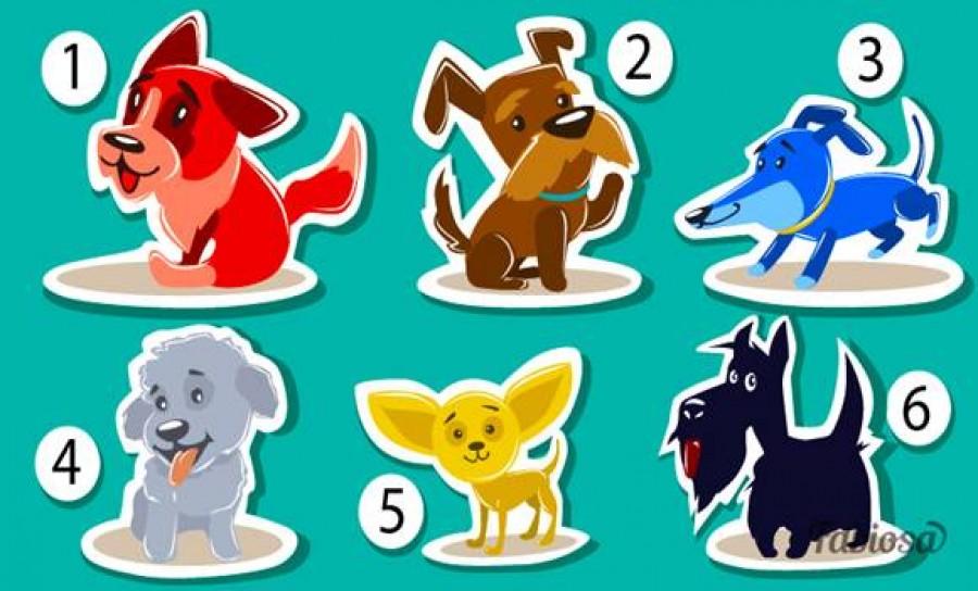 Válassz egy kutyát -rengeteget elárul rólad a választásod!