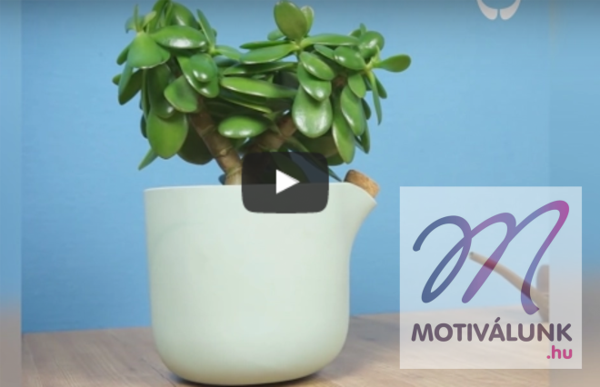 Egy virágcserép, amely JELZI, hogy vízre van szüksége!!! /+videó/
