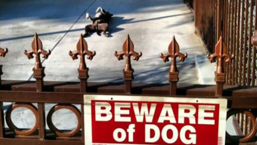 Kutyák, akikre nem igaz a - VIGYÁZZ A KUTYA HARAP - felirat