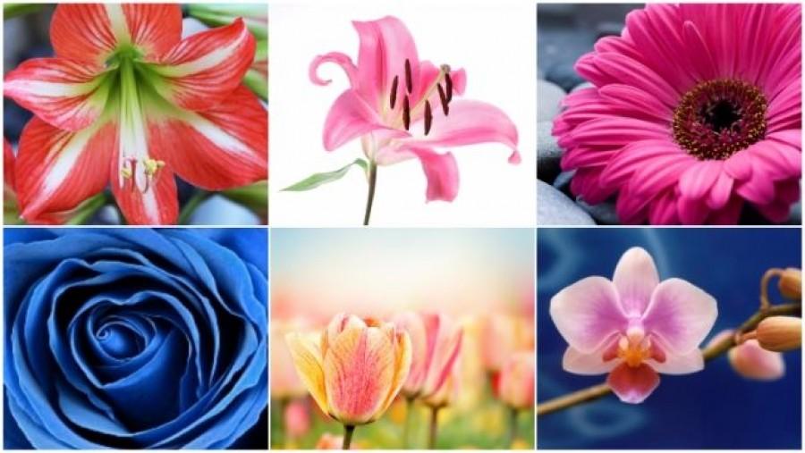 Válassz egy virágot: ezt árulja el rólad!