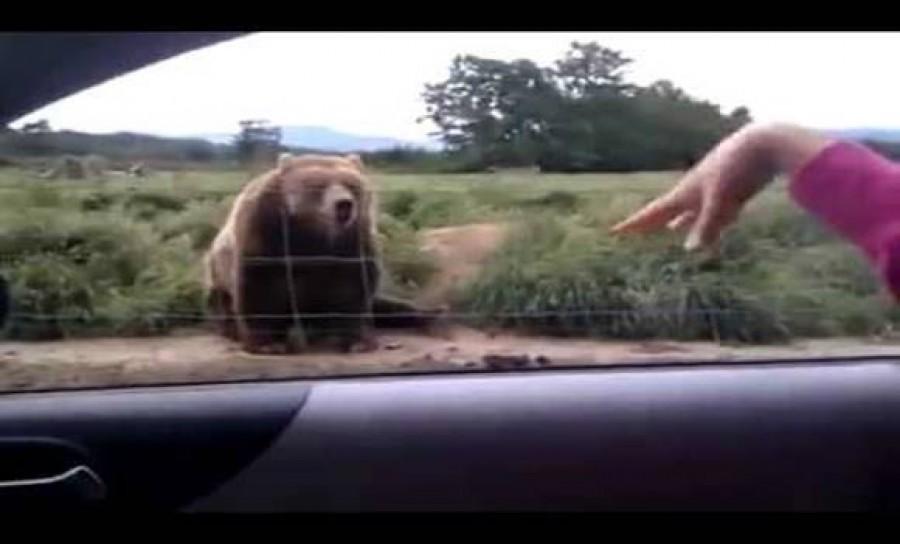 A nő integetett a medvének -erre a reakcióra még ő sem számított!