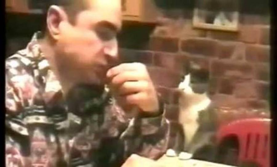 Hihetetlen, így adta siket gazdára tudtára a cica, hogy éhes!