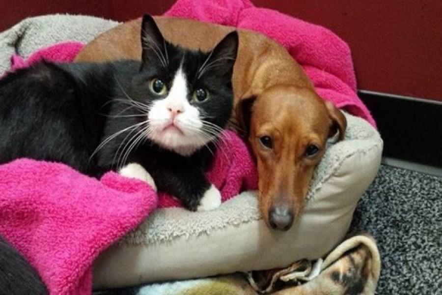 A kutyus elragadóan védelmezi a lebénult cicát -nagyon cukik!