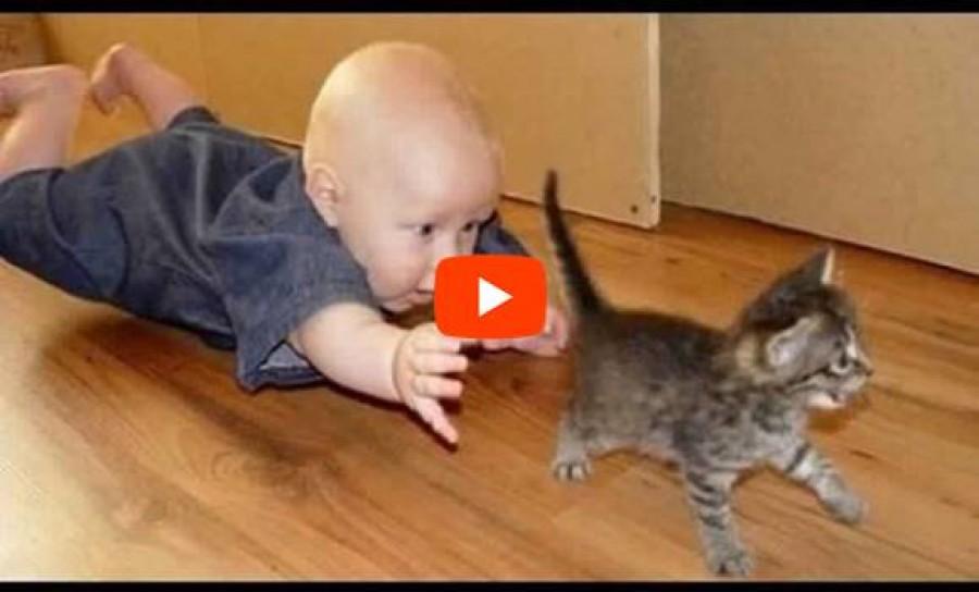 A mai nap legaranyosabb videója -cicák és babák!